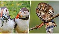 Yarasın! Audubon Fotoğrafçılık Ödülleri Kuşların Yemek Yerken Çekilmiş En İyi Fotoğraflarını Yayınladı