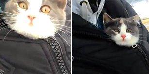 Buz Gibi Havada Ağaçtan Kurtardıkları Yavru Kedi Karşısında Sevgi Pıtırçıklarına Dönüşen Ana-Oğul