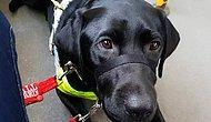 Görme Engelli Kadının Siyah Renkli Rehber Köpeği Olduğu İçin Otobüsten İnmesi İstendi