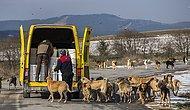 Fabrikasının Bahçesinde 2 Bin 500 Köpek Besliyor: 'Hayvanı Aç Olan İnsan Huzur Bulamaz'