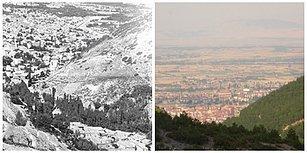 Çorak Tepeleri Orman Yaptılar: Konya'daki Üç Kardeşin Yarım Asırlık Mücadelesi