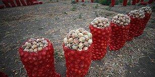 İthalatın Önü Açıldı: Kuru Soğandaki Gümrük Vergisi Sıfırlandı