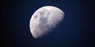 Ay'daki İlk Biyolojik Deney: Çin'in Keşif Aracındaki Pamuk Tohumları Filizlendi