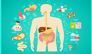 Düzenli Sindirim ve Sağlıklı Bağırsaklar İçin Neler Yapmanız Gerektiğini Biliyor musunuz?