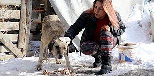 Profesörden Ders Niteliğinde Davranış: 20 Yıldır Günde 5 Saatini Ayırarak Sokak Hayvanlarını Besliyor