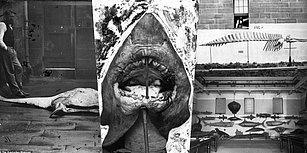 150 Yıldır Saklanan Müze Arşivlerinden Çıkan Sidney Limanı'ndaki Hayvanlara Ait Fotoğraflar