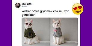 Dikkat, Aşırı Tatlılık İçerir! Hayvanlar Nasıl Giyinsin? İşte Böyle Giyinsin Diyeceğiniz 18 Cool Fotoğraf