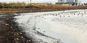 İzmit Körfezi Tanınmayacak Halde! Kirlilik Nedeniyle 169 Kuş Türünde Geriye 6-7 Tane Kaldı