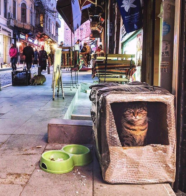 8. İstanbul'da sokak kedileri için yapılan minik evler: