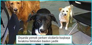 Minik Tatlı Hayvanlarla Yaptıkları Paylaşımlarla Hem İçimizi Isıtan Hem de Yüzümüzü Güldüren 21 Goygoycu