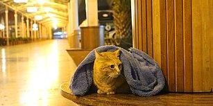 Sevgiyle Isıtıyorlar: Uyuyan Sokak Hayvanlarının Üstüne Battaniye Örten Hüseyin Yurtseven ve Arkadaşları