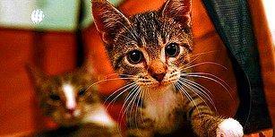 Kedi Tırmığı 'Taksirle Adam Yaralama' Suçu Sayıldı