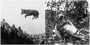 Tüm Zamanların En Büyük Savaşlarında Görev Almış Birbirinden Yetenekli Hayvanlar
