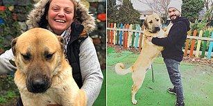 Düştüğü Sondaj Kuyusundan 12 Gün Sonra Kurtarılan 'Kuyu Köpek' 2 Yaşında!