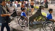 Tekerlekli Sandalyeye Mahkum Olan İnsan Dostunun Festival Alanına Gitmesine Yardım Eden Köpek