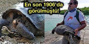 100 Yılı Aşkındır Nesli Tükendiği Düşünülen Dev Kaplumbağa Türü Galapagos Adaları'nda Bulundu!