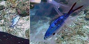Denizlerimizin En Büyük Kirleticilerinden Olan Plastiklerin Neden Olduğu Can Sıkıcı Olay!