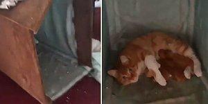 Atölyede Baktığı Kedi Doğum Yapınca Aşırı Mutlu Olan Adam