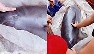 Gözyaşları Görülünce Eti İçin Satılmaktan Son Anda Kurtulan Yunus