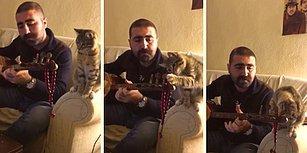 İnsan Dostu Bağlama Çalıp Türkü Söylerken Yaptığı Hareketlerle Sevimlilik Patlaması Yaşayan Kedi