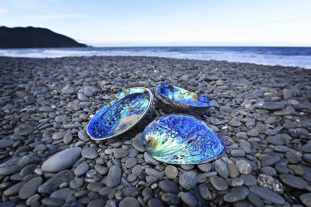 3. Paua , okyanusun en güzel canlısı