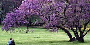 Bahar Yaklaşırken Hasta Olmayın! İşte Baharda En Çok Görülen Hastalıklar ve Korunma Yolları