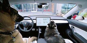 Tesla Araçları Hayvan Dostlarınızı 'Dog Mode' ile Güvende Tutuyor!