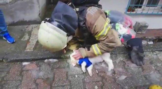 15 Temmuz Mahallesi'nde 4 katlı bir binanın 1'inci katında dün henüz bilinmeyen bir nedenle çıkan yangında içeride bulunan bir köpek dumandan etkilendi.