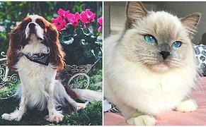 Ülkemizin Her Yanından Sevimli Dostlarımızın Fotoğraflarını Paylaşan 'Pets of Turkey'den Gününüze Neşe Katacak Paylaşımlar