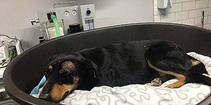 Hayvana Yönelik Şiddette Bugün: Havlama Sesinden Rahatsız Olduğu Köpeği Başından Vurdu!