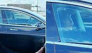 120 Kilometre Hızla Giden Tesla'nın İçinde Uyuyan Şoför