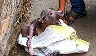 Ölmek Üzereyken Bulunan Köpek Yavrusunun İyi İnsanların Elinde Yaşadığı Değişime İnanamayacaksınız!