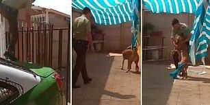 Brandaya Dolandıktan Sonra Çaresiz Kalan Köpek, Kendisini Kurtaran Polise Sarılarak Teşekkür Etti!