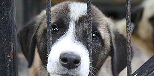 Prison Break Bodrum: Hayvan Barınağını Basan Kadın 100 Köpeği Serbest Bıraktı
