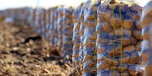 İddia Meclis Gündeminde: 'Patates İthalatını Bakanın Danışmanlık Yaptığı McCain Foods mu Gerçekleştirecek?'