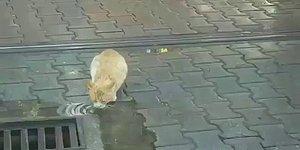 Rayın Üstünde Su İçen Kedi İçin Tramvayı Durduran Güzel İnsan!