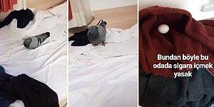 Dünyanın En Güzel Story Serisi Olabilir: Odaya Giren Güvercin Yumurta Bıraktı