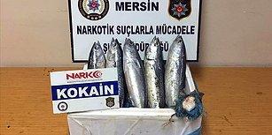 Kaçakçıların Yeni Yöntemini Narkotik Köpekleri Ortaya Çıkardı: Balık Karnına Uyuşturucu Saklamışlar