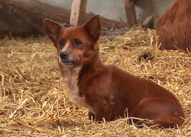 Rookie, enerji dolu küçük bir köpek yavrusu. Her zaman koşmaktan ve oynamaktan hoşlanıyor ve insanları da oldukça çok seviyor.