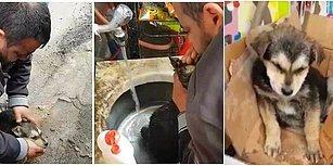 Boğazına Salam Takılan Köpeği, Suni Teneffüs ve Kalp Masajı ile Hayata Döndüren Kahraman