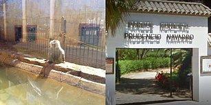 Kapanan Hayvanat Bahçesinde Ölüme Terk Edilen Dostlarımız Çaresizce Kurtarılmayı Bekliyor!