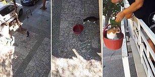 Sokakta Gezdikten Sonra VIP Asansörü Olan Sepetine Binerek Evine Gelen Kedi