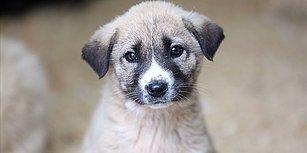 İyi ki Hayatımızdalar: Sosyal Medyadan 4 Nisan Dünya Sokak Hayvanları Günü Mesajları 😻🐶