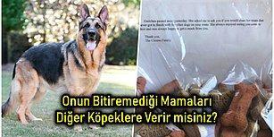 Her Gün Beslediği Köpeklerden Biri Hayatını Kaybedince Göz Yaşartıcı Bir Sürprizle Karşılaşan Postacının Hikâyesi