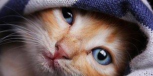 Kediler Kendi İsimlerini Öğrenebiliyor mu?