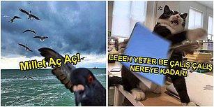 Minnoş Hayvanları Mizahlarına Alet Ederek İçimizi Isıtmakla Kalmayıp Yüzümüzü de Güldürmüş Kişilerden 25 Paylaşım