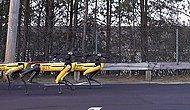 Boston Dynamics'in Robot Köpekleri Şimdi de Kamyon Çekti!