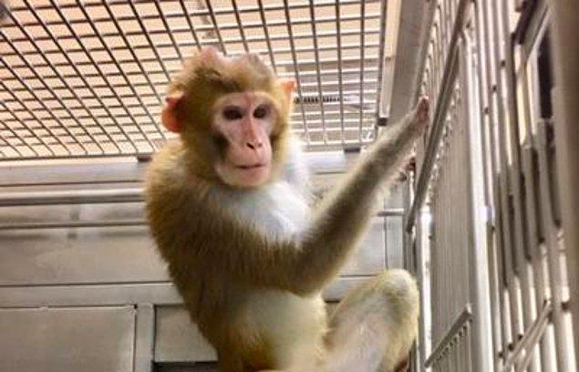 Dünya Laboratuvar Hayvanları Günü