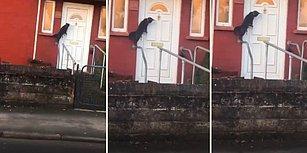 Eve Girebilmek İçin Kapı Tokmağı Çalan Kedi