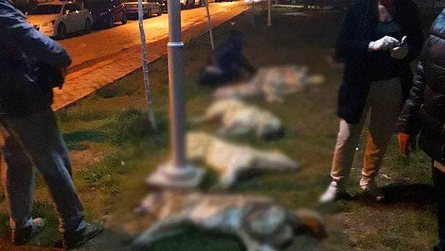Ankara'nın Batıkent semtinde tam on altı köpek tavuk eti ile zehirlenerek öldürüldü, planlı...